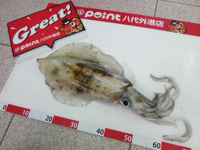 Point aoriika 190504 1 1