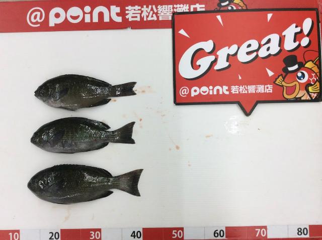 Point kuro 191004 3