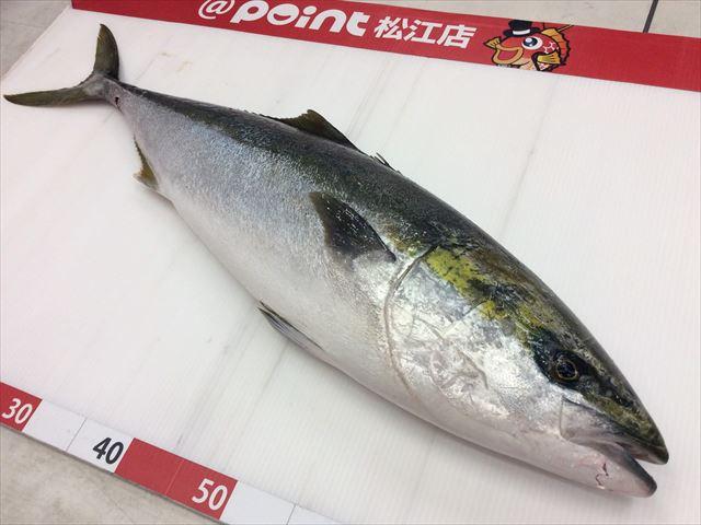 Matsue buri 200104 1