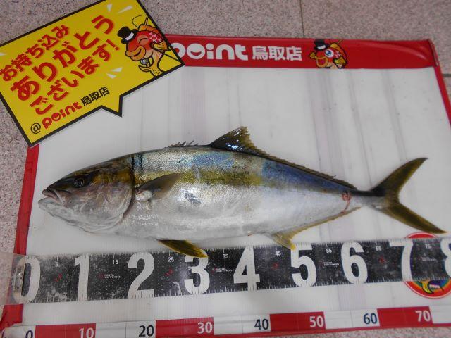 ヒラマサ200417