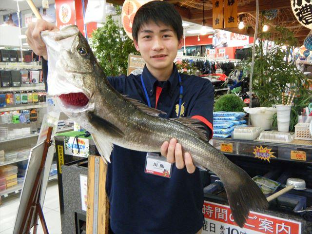 Matsue suzuki 200405 1