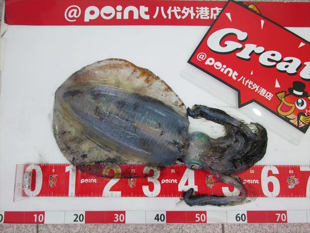 Point aoriika 200412 1