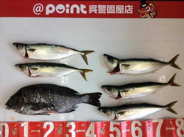 Point chinu 20200411 01