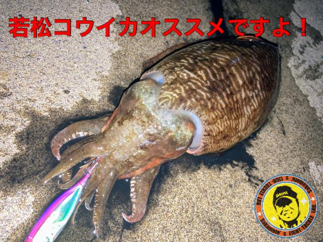 若戸渡船コウイカタイトル